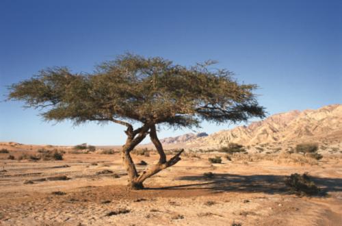 wadi-araba